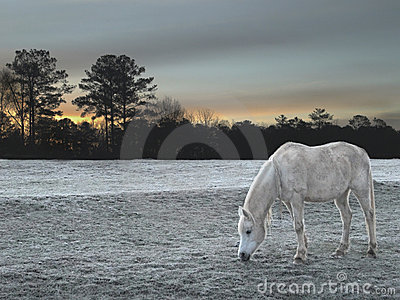 White Horse on frost covered field during sunrise