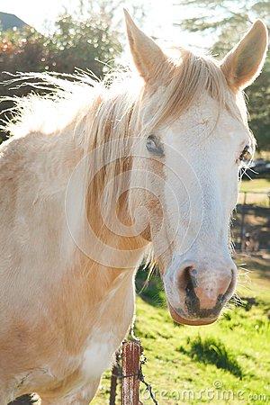 White Horse In Green Grass Field During Daytime Free Public Domain Cc0 Image