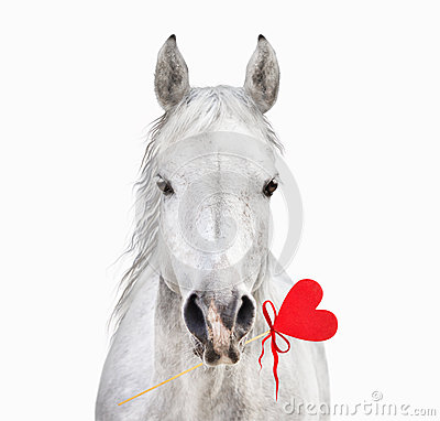 White horse with heart in mouth, Valentine