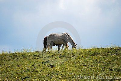 White horse on hilltop against sky