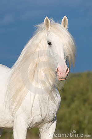 Free White Horse In Autumn Royalty Free Stock Photos - 16166378