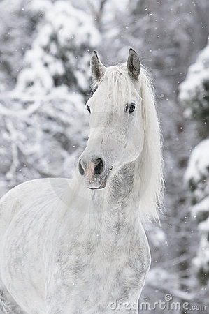 Free White Horse In Winter Royalty Free Stock Images - 17877739