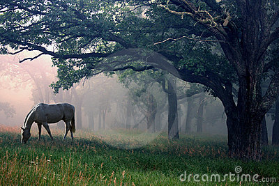 White Horse in the Mist