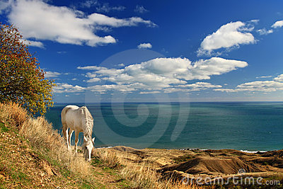 White horse near the sea