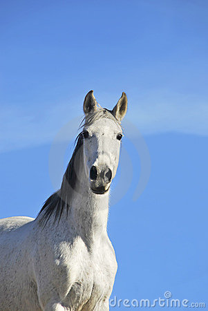 White horse over the sky