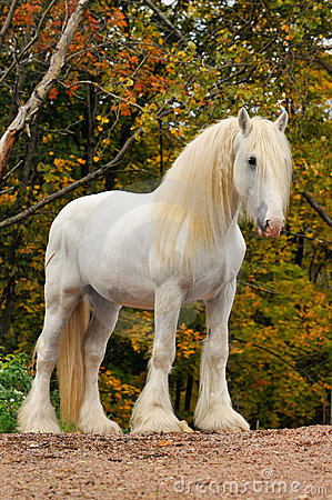 White horse portrait in autumn