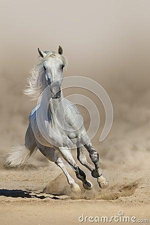 Free White  Horse Run Stock Photo - 59779580