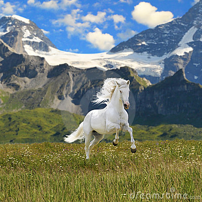 Free White Horse Run Gallop Royalty Free Stock Image - 15360016