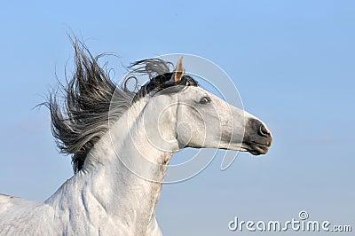 White horse on sky background