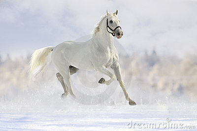 White Horse In Snow Royalty Free Stock Photo Image 21511725