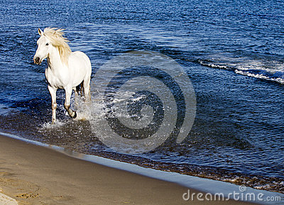 White Horse Splashing