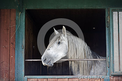 White Horse in a Stable