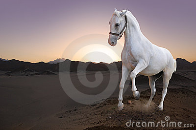 White horse and sunset in the desert