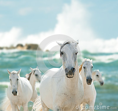 Free White Horses On The Sea Stock Images - 48546814