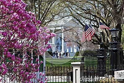 White House in springtime