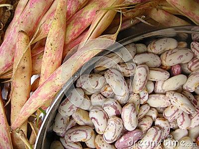 White Kidney Beans Two
