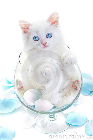 White kitten in a glass