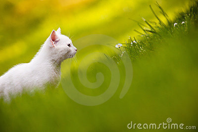 White kitten in grass
