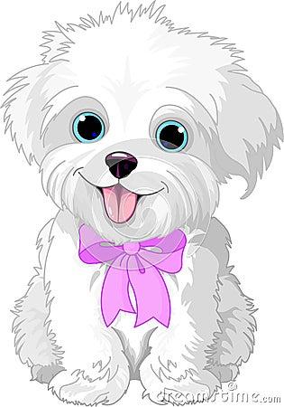 White lap-dog