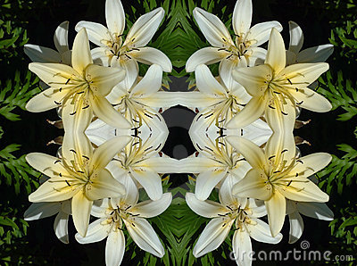 White Lilies on Black Pattern