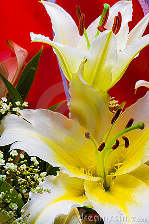 Free White Lily Stock Photography - 2901442