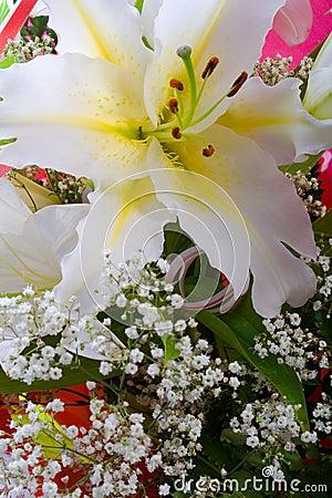 Free White Lily Stock Photo - 4019190