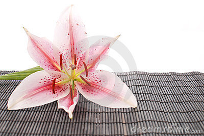 White Lily On Black Bamboo