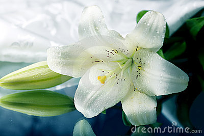 White lily on the mirror