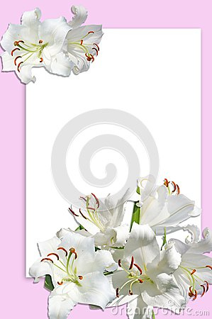 White lily with postcard