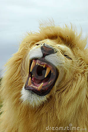 Free White Lion Roar Stock Photos - 2039533