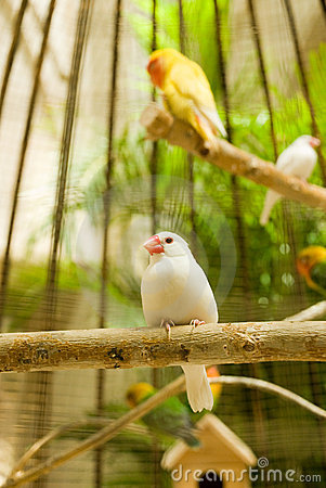 White Little Bird