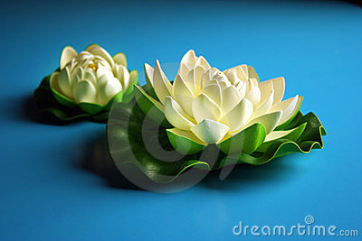 White Lotus Royalty Free Stock Photography - Image: 23560057
