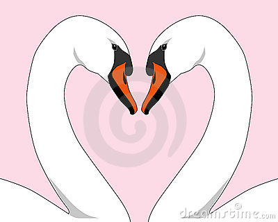White Love Swans