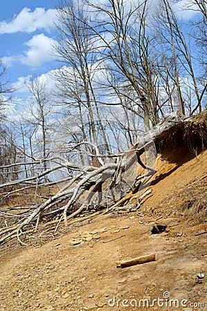 White Oak Stake