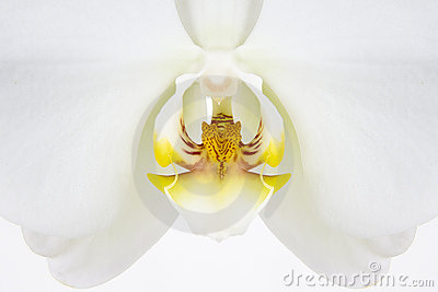 White orchid flower macro detail