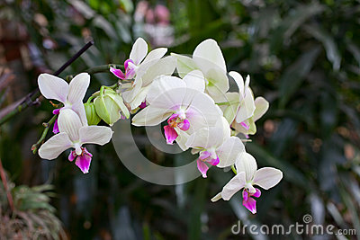 White Orchid Flowers on Leaves Background