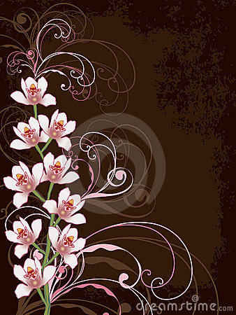 White orchids with pink swirls