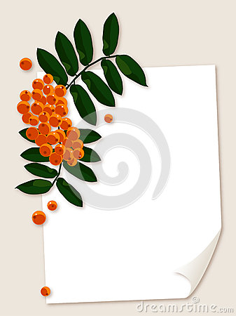 White paper sheet with rowan berries branch.