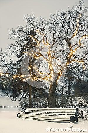White park bench under illuminated tree in winter