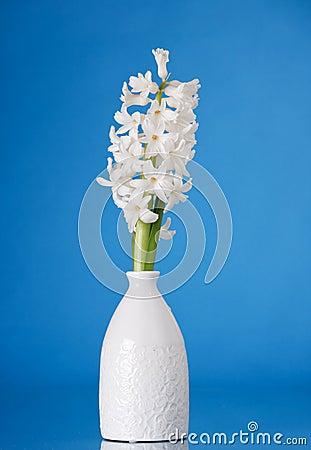 White pearl hyacinth