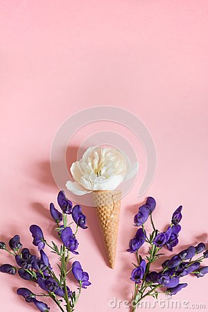 Free White Peony Flower In Waffle Cone And Ultra Violet Aconitum On Pink Background. Summer Concept. Stock Image - 112023121