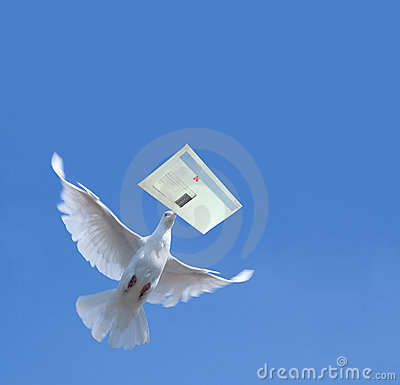 Free White Pigeon Stock Photo - 13362470