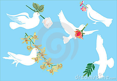 White pigeon and flowers
