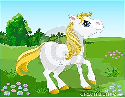 White_pony