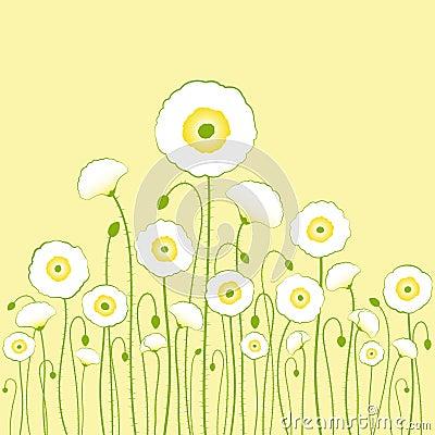 White poppy on yellow background