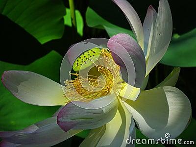 White And Purple Flower Free Public Domain Cc0 Image