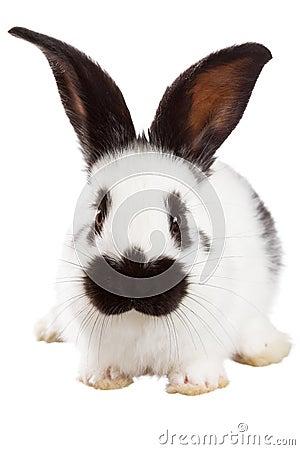 Free White Rabbit Royalty Free Stock Images - 51772199