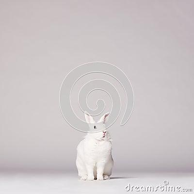 Free White Rabbit Royalty Free Stock Photos - 53633418