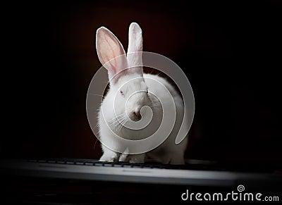 White rabbit on black low key