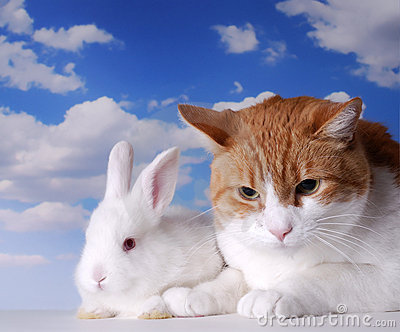 White Rabbit and Cat